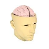 Tête avec le cerveau évident Image libre de droits