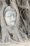 Tête Ayuthaya de Bouddha Photo libre de droits