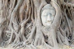 Tête Ayuthaya de Bouddha Photos stock