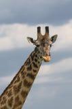 tête bleue de giraffe au-dessus de ciel photo stock