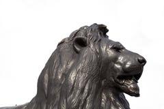 Tête carrée de lion de Trafalgar - Londres Photos libres de droits