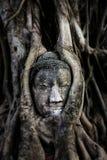 tête d'âBuddha et arbre de buddhaâ Photographie stock