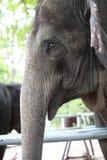 Tête d'éléphant Images stock