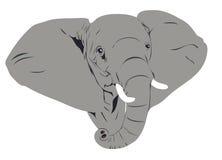 Tête d'éléphant africain Images libres de droits