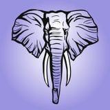 tête d'éléphant africain images stock