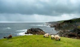 Tête d'Achill dans le comté Mayo sur la côte ouest de l'Irlande image libre de droits