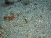 Tête d'anguille de jardin image libre de droits