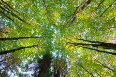Tête d'arbres photo stock