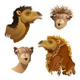 Tête d'ensemble de chameau illustration libre de droits