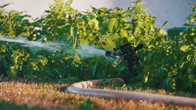 Tête d'herbe de arrosage de travail d'arroseuse de jardin dans le mouvement lent banque de vidéos