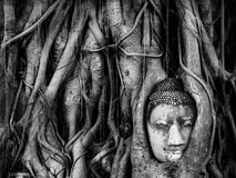 Tête d'image de Bouddha dans l'arbre root3 Photos libres de droits