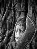 Tête d'image de Bouddha dans la racine d'arbre en noir et blanc Photographie stock