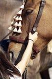 Tête d'un cheval Image libre de droits