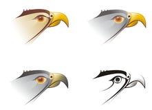 Tête d'un faucon. Une illustration Illustration Stock