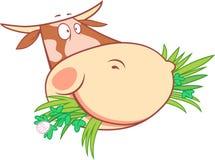 Tête d'une vache de mastication Images stock