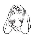 Tête de basset de race de chien Images stock