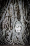 Tête de Bouddha à Ayutthaya Photographie stock