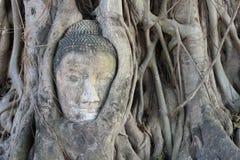 Tête de Bouddha à l'intérieur d'un arbre, Wat Mahatat Images stock