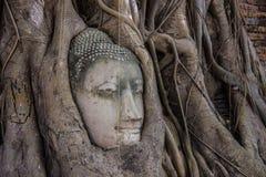 Tête de Bouddha Images stock