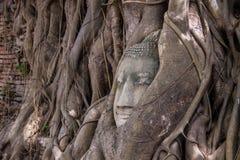 Tête de Bouddha Photographie stock libre de droits