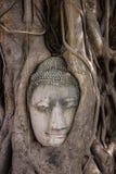 Tête de Bouddha Photos stock