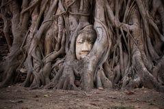 Tête de Bouddha dans des fonds d'arbre Photographie stock
