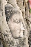 Tête de Bouddha dans des fonds d'arbre Images libres de droits