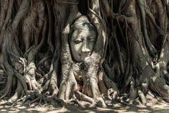 Tête de Bouddha dans des fonds d'arbre photo stock