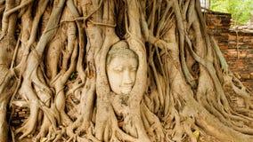 Tête de Bouddha dans des fonds d'arbre - temple Thaïlande Photo stock