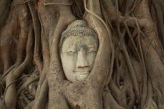 Tête de Bouddha dans l'arbre Photos stock