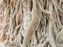 Tête de Bouddha dans l'arbre Images libres de droits