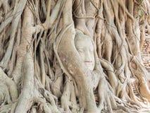 Tête de Bouddha dans l'arbre Image stock