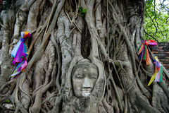 Tête de Bouddha dans l'arbre de banian Image libre de droits