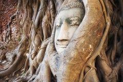 Tête de Bouddha dans le tronc d'arbre, Ayutthaya, Thaïlande Images stock