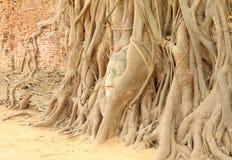Tête de Bouddha de grès Photos libres de droits