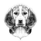 Tête de briquet de chien illustration stock
