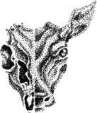 Tête de cerfs communs Photos stock