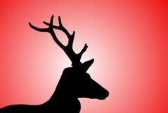Tête de cerfs communs Image stock