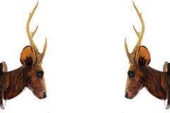 Tête de cerfs communs Images stock