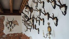 Tête de cerfs communs d'isolement sur le fond blanc de mur photos libres de droits