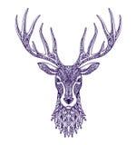 Tête de cerfs communs d'isolement sur le fond blanc Illustration tirée par la main de vecteur illustration de vecteur