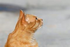 Tête de chat Photographie stock