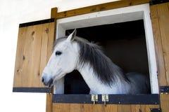 Tête de cheval Photo stock