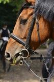 Tête de cheval Images stock