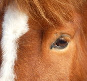 Tête de cheval Image stock