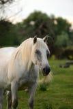 Tête de cheval Photos stock