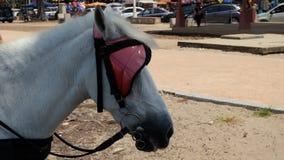 Tête de cheval blanc Image stock