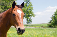 Tête de cheval brun photographie stock libre de droits