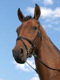 Tête de cheval contre le ciel bleu Photographie stock