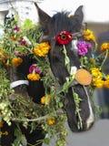 Tête de cheval décorée des fleurs pour le festival Images stock
